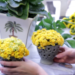 Vídeo – Home Tips – Arranjo de Flor e Dica Rápida