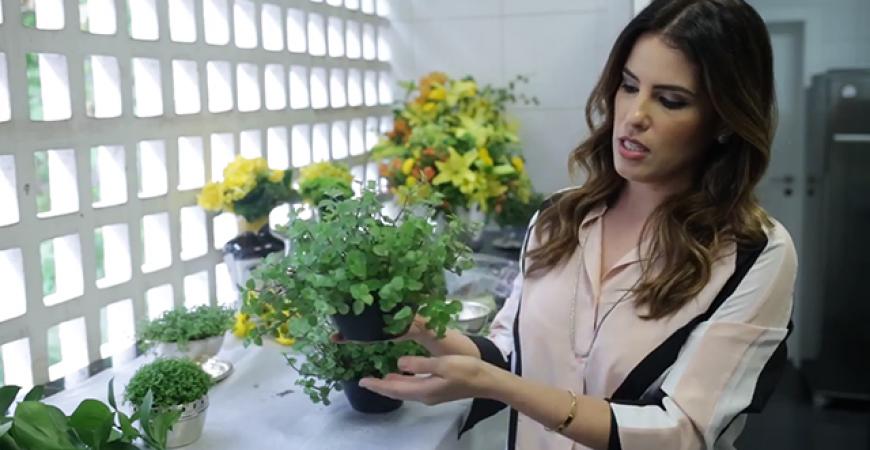 Vídeo – Home Tips – Arranjo de Planta Sem Flor